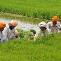 Hindus Take Up Farming While Muslims Bank on Industrial Jobs, Reveals Census Data