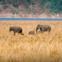 India presents report on wildlife conservation initiatives: UN body