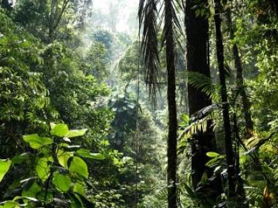 Leading companies respond to biodiversity loss