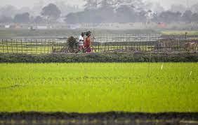 सीजन 2021-22 के लिए सभी खरीफ फसलों के न्यूनतम समर्थन मूल्य में बढ़ोत्तरी को मंज़ूरी