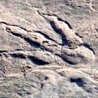 डायनासोरों की छह विभिन्न प्रजातियों के पैरों के निशान मिले -11 करोड़ साल पहले के अंतिम डायनासोरों के हैं पदचिह्न